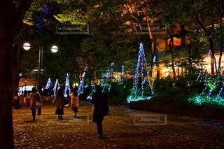 アウトドア,冬,夜,屋外,街,光,イルミネーション,ライトアップ,通り,点灯