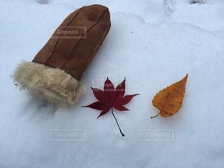 秋の終わりの写真・画像素材[840762]