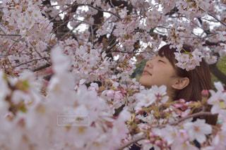 ピンクの花🌸の写真・画像素材[842323]