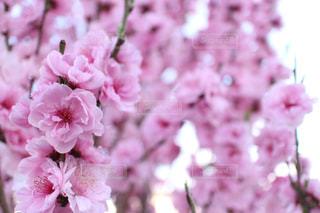 近くの花のアップの写真・画像素材[842334]