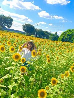 フィールド内の黄色の花の写真・画像素材[887659]