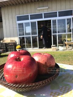 フルーツ,りんご,果樹園