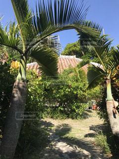 ツリーの横にあるヤシの木のグループの写真・画像素材[901320]