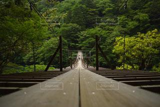 スリル満点の吊り橋の写真・画像素材[942126]