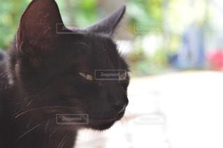 子猫のにゃんこですの写真・画像素材[980493]