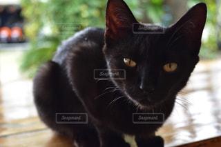 子猫のにゃんこですの写真・画像素材[980495]