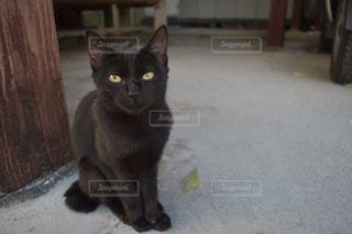 子猫のにゃんこですの写真・画像素材[980497]