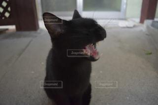 子猫のにゃんこですの写真・画像素材[980500]