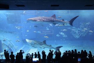 バック グラウンドで沖縄美ら海水族館で観客の前でステージ上のバンドを見ている人のグループの写真・画像素材[1014134]