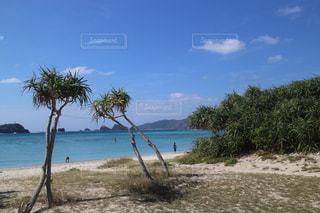 水の体の前でヤシの木とビーチの写真・画像素材[1014145]