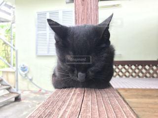 木製テーブルの上に座っている猫の写真・画像素材[1256030]