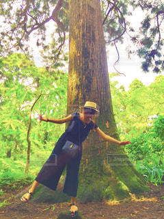 大きな杉の〜木の下で〜の写真・画像素材[1329538]