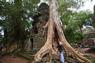 木の隣に立っている人の写真・画像素材[1567865]