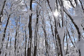 フォレスト内のツリーの写真・画像素材[1689043]