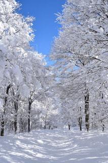 雪に覆われた斜面をスキーに乗る男の写真・画像素材[1732248]