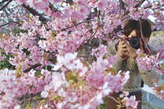 近くの花のアップの写真・画像素材[1791658]