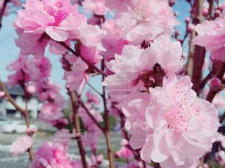 近くの花のアップの写真・画像素材[1791670]