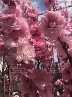 花の写真・画像素材[1958830]
