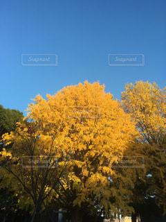 自然,秋,屋外,黄色,樹木