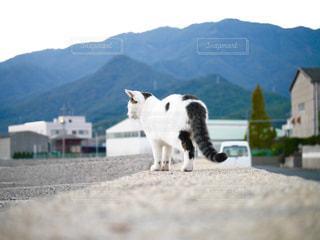 猫,散歩,休日