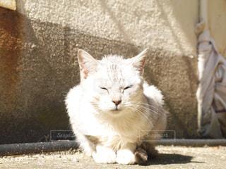 猫,休日,日向ぼっこ