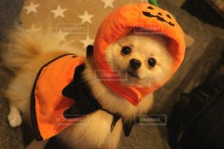 近くのぬいぐるみの犬帽子をかぶっての写真・画像素材[843492]