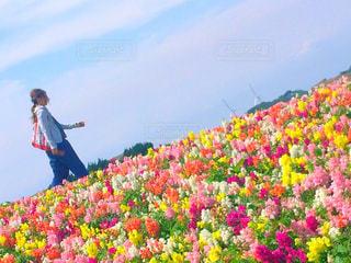 お花畑の写真・画像素材[889880]