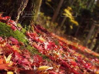 秋色の写真・画像素材[895083]