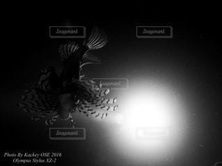 暗闇の中で立っているゼブラの写真・画像素材[821749]