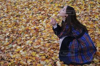 落ち葉の絨毯の写真・画像素材[846762]