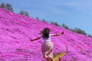 芝桜の写真・画像素材[855259]