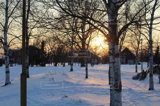 雪に覆われた公園と夕日の写真・画像素材[912873]