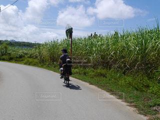 サトウキビ畑の側をサイクリングの写真・画像素材[950252]