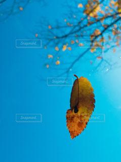 近くの木のアップの写真・画像素材[858252]