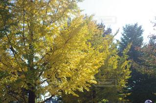 フォレスト内のツリーの写真・画像素材[854153]