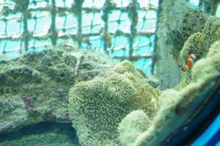 近くに珊瑚のアップの写真・画像素材[901342]