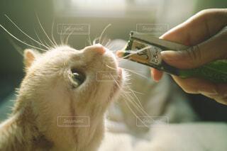 光に照らされながらおやつを食べる猫の写真・画像素材[4260538]