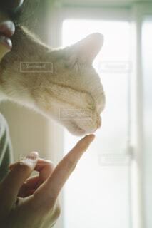 おやつを欲しがる猫の写真・画像素材[4260632]