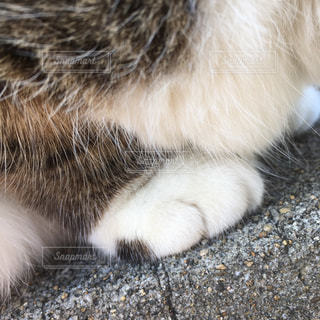 近くに白い表面で横になっている猫のアップの写真・画像素材[871593]