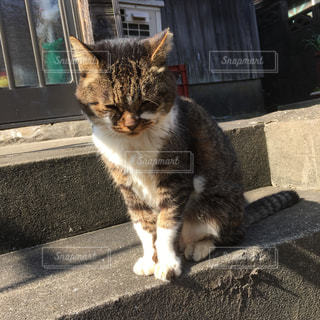 建物の前に座っている猫の写真・画像素材[871598]