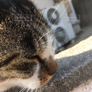近くに猫のアップの写真・画像素材[891159]