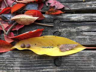 秋の公園でランチの写真・画像素材[843838]
