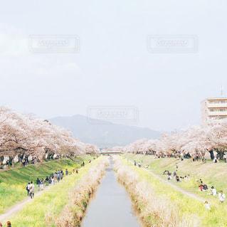 芝生の丘の上を歩く人々 のグループの写真・画像素材[1158222]