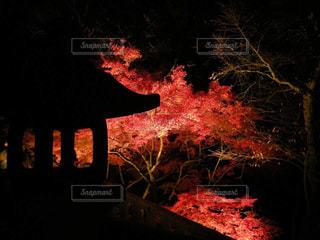 紅葉ライトアップの写真・画像素材[857313]