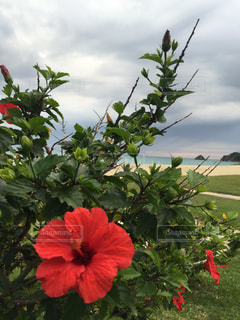 植物の赤い花の写真・画像素材[904085]