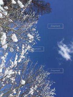 近く雪に覆われた木のアップの写真・画像素材[951640]