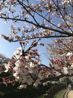 木の枝に花の花瓶の写真・画像素材[1106588]