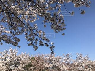 近くの木のアップの写真・画像素材[1106589]