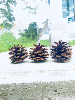 木,屋外,白,窓,仲良し,たくさん,装飾,友達,三兄弟,草木,松かさ,天然素材