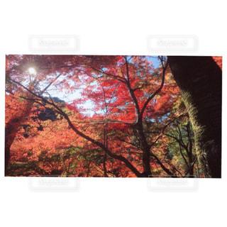 近くの木のアップの写真・画像素材[872987]